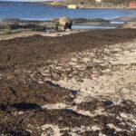 Verschmutzter Ostseestrand: eine mögliche nützliche Ressource